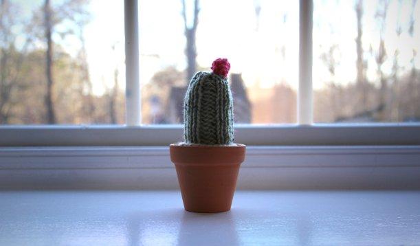 cactus008